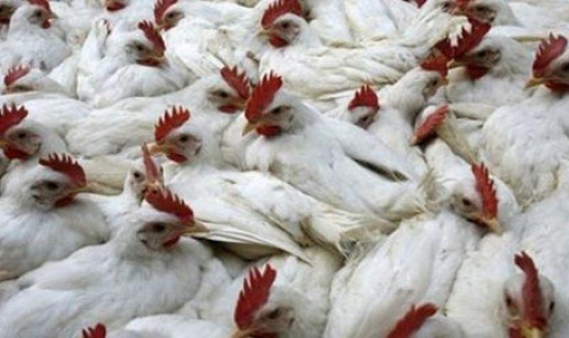 Спешни мерки за борба с инфлуенца по домашните и дивите птици в Област Пловдив
