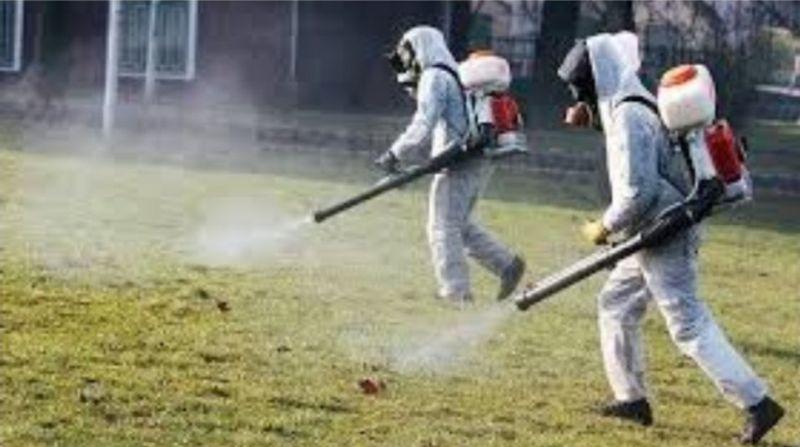 Започва дезинфекцията срещу чумата по животните